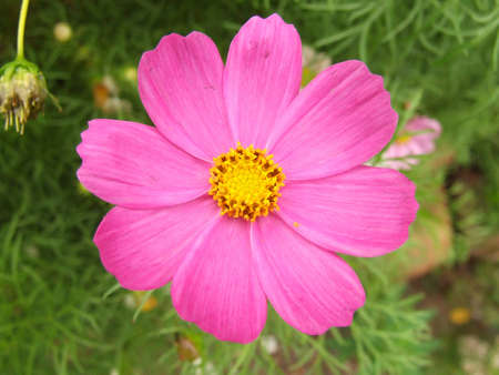 beatuful: pink flower
