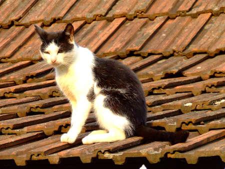Katze auf Ziegeldach