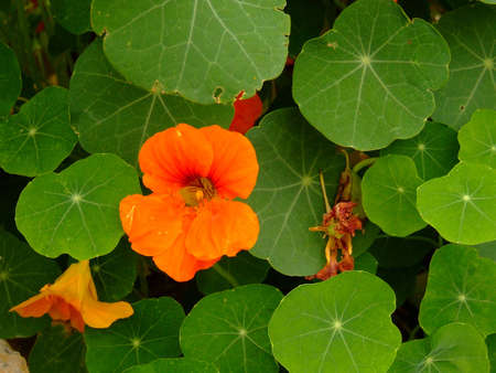 flower Stock Photo - 1576949
