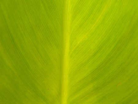 leafage: leaf Stock Photo