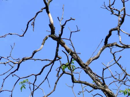 dry nut limb2 Stock Photo - 2209843