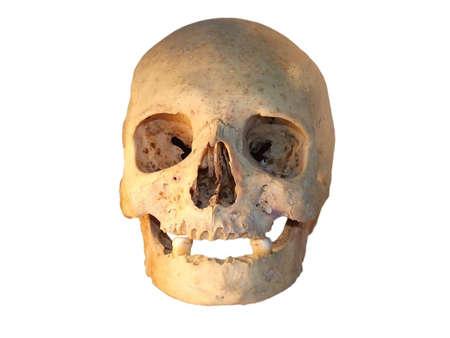 Cráneo humano aislado en blanco Foto de archivo - 2256605