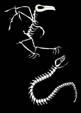 bird and snake skeleton Illustration