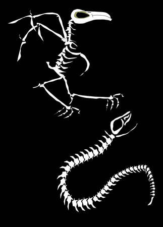 bird and snake skeleton Ilustração