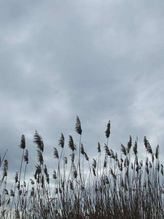 Reed und Sturm