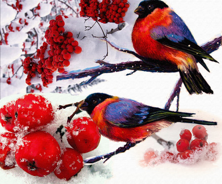 snowcovered: bullfinches on a snow-covered mountain ash. Winter illustration.