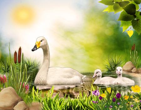 agachado: Granja. Cisne y bebé cisnes. cisne de la madre y los bebés que nadan en el estanque