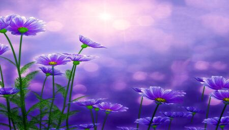 colorize: Beautiful flowers made with color filters. Violet background. Stock Photo