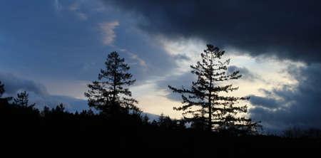 前景の木と穏やかな朝の日の出 写真素材 - 12087224