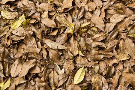 Decaying group of leaves with a few different leaves Stock Photo - 15126142