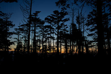vancouver island: Pine trees in foreground of west coast sunset scene