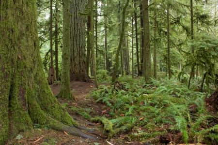 vancouver island: Rainforest in British Columbia, Canada