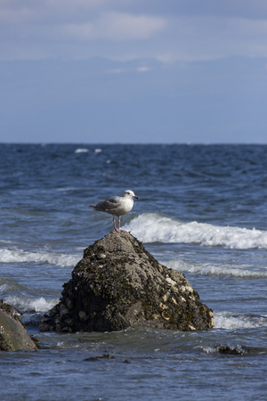 sea gull: Waves break around rock with gull perched on it Stock Photo