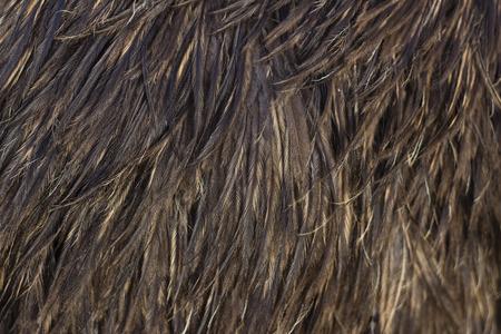 Bild mit Emu Feder close-up gefüllte Standard-Bild - 38305302