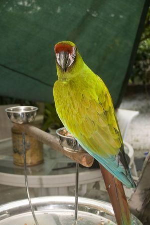polly: Polly