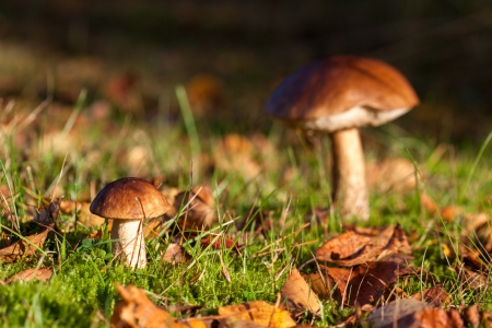 Mushroom Growing in Autumn Forest photo