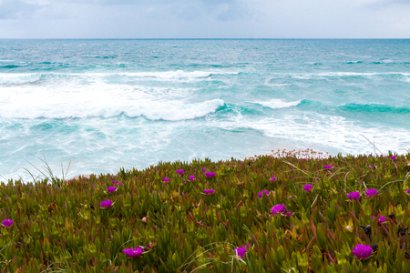 flowers grow on the ocean, waves, water photo