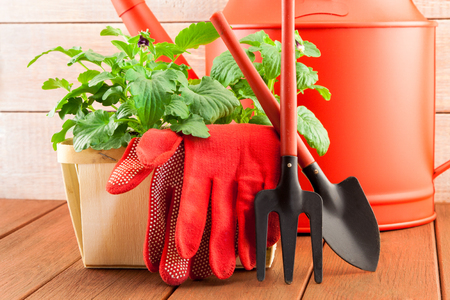 Garden tools with flowers on wood background photo