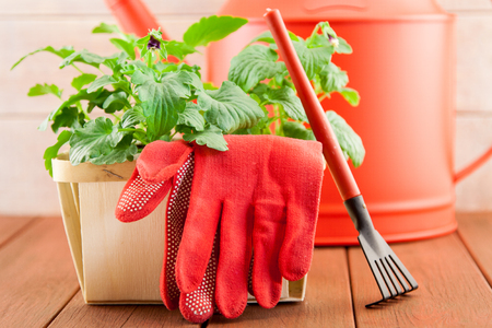 Garden tools with flowers on wood background Stock Photo - 28287742