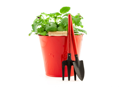 Garden tools with plants isolated on white background photo