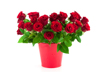 long stem: bouquet of bright red roses in a red bucket on a white background