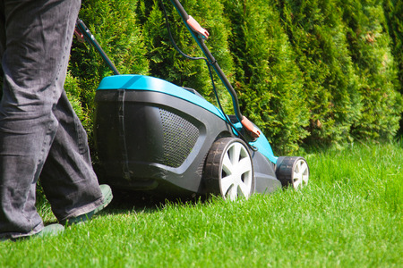 Green grass is mowed lawn mower in sunny day Reklamní fotografie