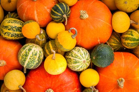 ripe organic colored pumpkins as a background photo