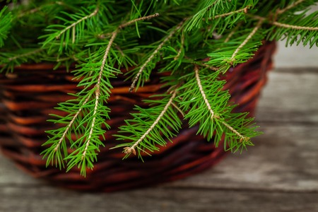 basket with pine tree branch on a wooden table photo