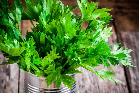 curly leafed: organic fresh bunch of parsley on a wooden background