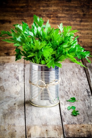 curly leafed: organic fresh bunch of parsley in tin on a wooden rustic background