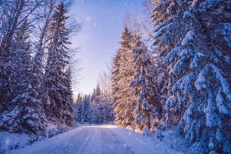 Beautiful winter landscape: snowy forest on sunny day in Finland