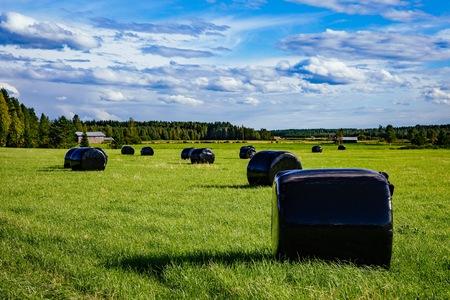 美しい田園風景。農村のフィンランドの緑のフィールドに黒いプラスチックにわら俵
