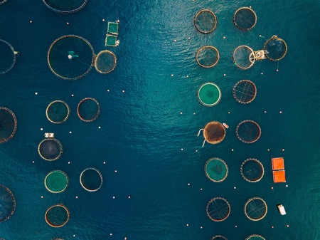 Salmon fish farm with floating cages in Greece. Aerial view Stok Fotoğraf
