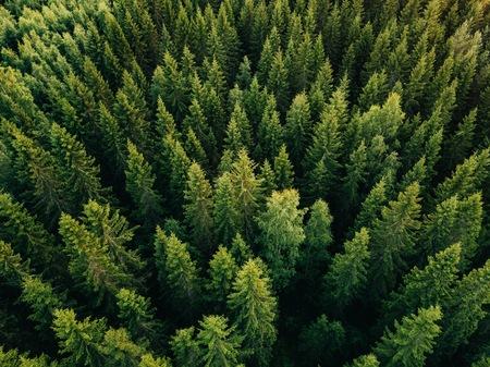 Vue aérienne de dessus des arbres verts d'été dans la forêt dans les régions rurales de la Finlande. Photographie de drone Banque d'images