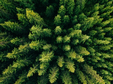 Aerial top view of summer green trees in forest in rural Finland. Drone photography Reklamní fotografie