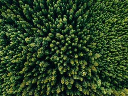 Aerial top view of summer green trees in forest in rural Finland. Drone photography 版權商用圖片