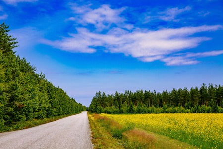 Countryside road along yellow rapeseed flower field and blue sky in rural Finland landscape 写真素材