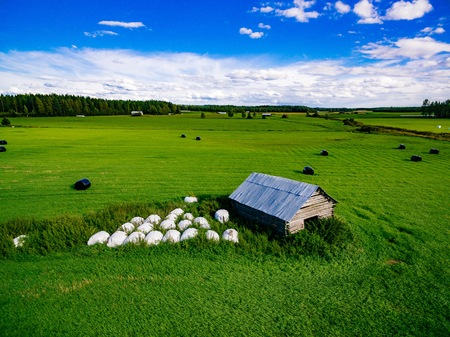 Aerial view of round straw bales in black plastic in green field in rural Finland. Beautiful countryside landscape.