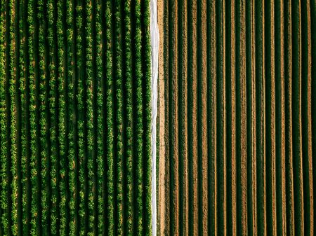 Aerial view of potato rows field in agricultural landscape in Finland