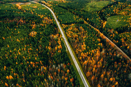 Aerial view of rural road with red car in yellow and orange autumn forest in Finland.