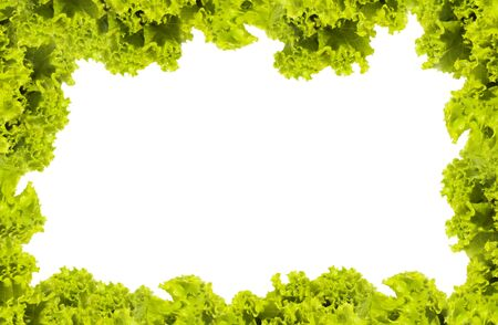 Fresh Green Salad frame  photo