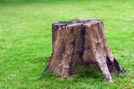 stump lying in the green grass