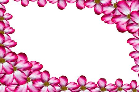 Nice frame by pink flower Stock Photo - 10204103