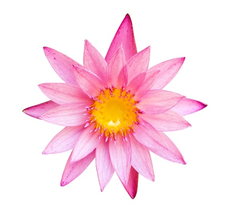 Pink lotus flower isolated on white photo