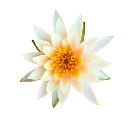 Orange lotus isolated on white background photo