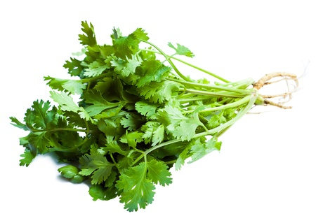 Coriander isolated on White Background  photo