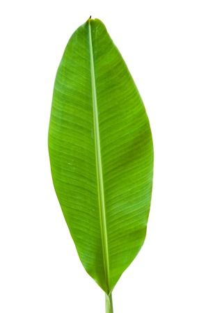 Banana leaf isolated on white background photo