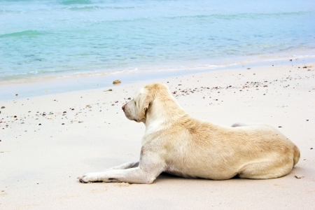 Dog relaxing on the beach in sunny day Stock Photo