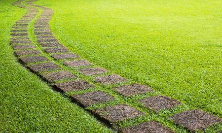 greeen: Walk way in greeen field during sunny day
