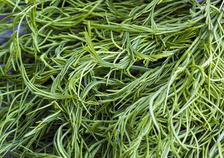 pennata: Acacia Pennata in Thai fresh market Stock Photo